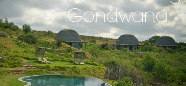 5 Tips for visiting Gondwana Game Reserve {Paradise part 2}