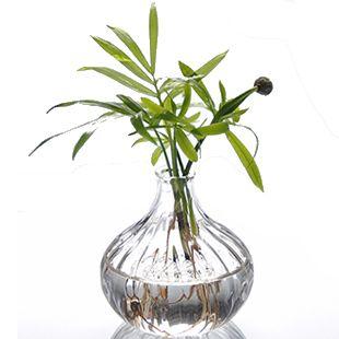 grow plants in water 2