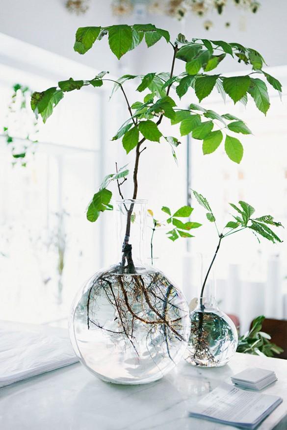 grow plants in water 4